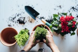 re-potting a plant