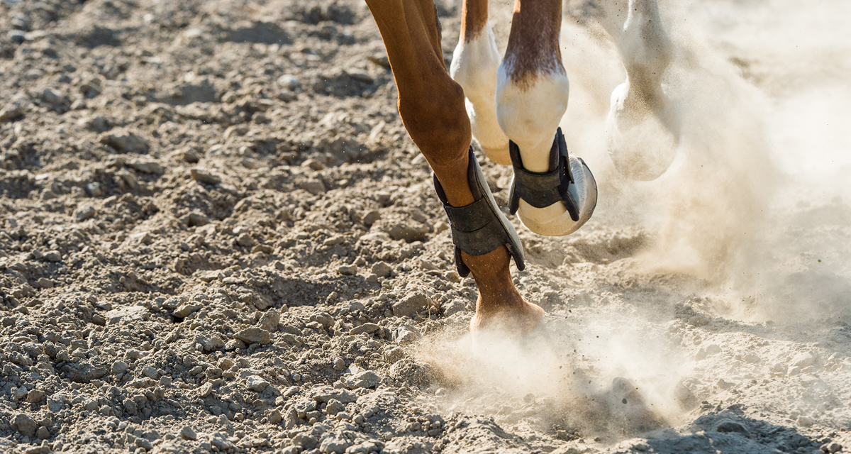 Equestrian website featured image